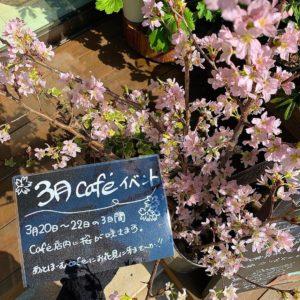 2020年3月桜カフェイベント